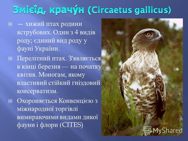 хижий птах родини яструбових. Один з 4 видів роду ; єдиний вид роду у фауні України. Перелітний птах. З ' являється в кінці березня на початку квітня. Моногам, якому властивий стійкий гніздовий консерватизм. Охороняється Конвенцією з міжнародної торг