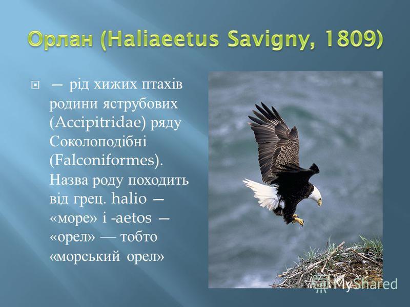 рід хижих птахів родини яструбових (Accipitridae) ряду Соколоподібні (Falconiformes). Назва роду походить від грец. halio « море » і -aetos « орел » тобто « морський орел »