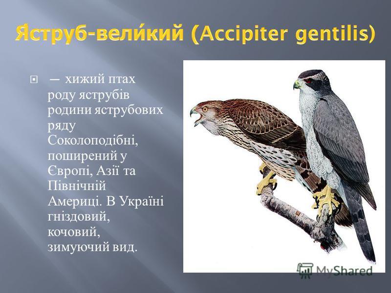 хижий птах роду яструбів родини яструбових ряду Соколоподібні, поширений у Європі, Азії та Північній Америці. В Україні гніздовий, кочовий, зимуючий вид.