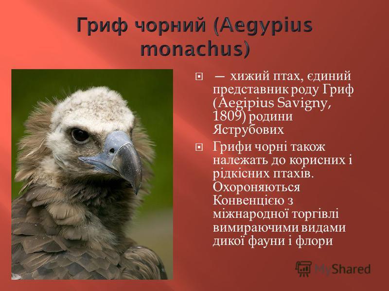 хижий птах, єдиний представник роду Гриф (Aegipius Savigny, 1809) родини Яструбових Грифи чорні також належать до корисних і рідкісних птахів. Охороняються Конвенцією з міжнародної торгівлі вимираючими видами дикої фауни і флори