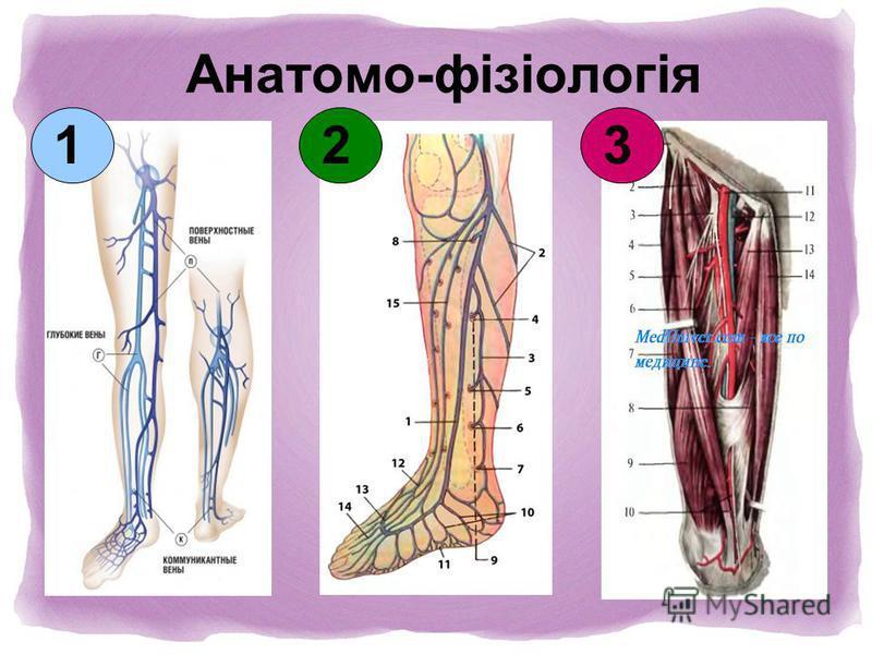 Анатомо-фізіологія 123