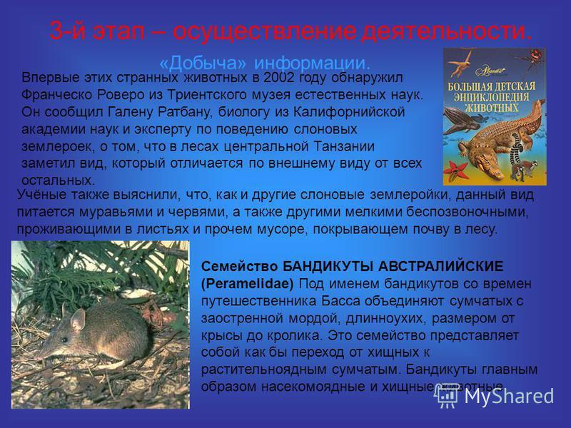 3-й этап – осуществление деятельности. Впервые этих странных животных в 2002 году обнаружил Франческо Роверо из Триентского музея естественных наук. Он сообщил Галену Ратбану, биологу из Калифорнийской академии наук и эксперту по поведению слоновых з