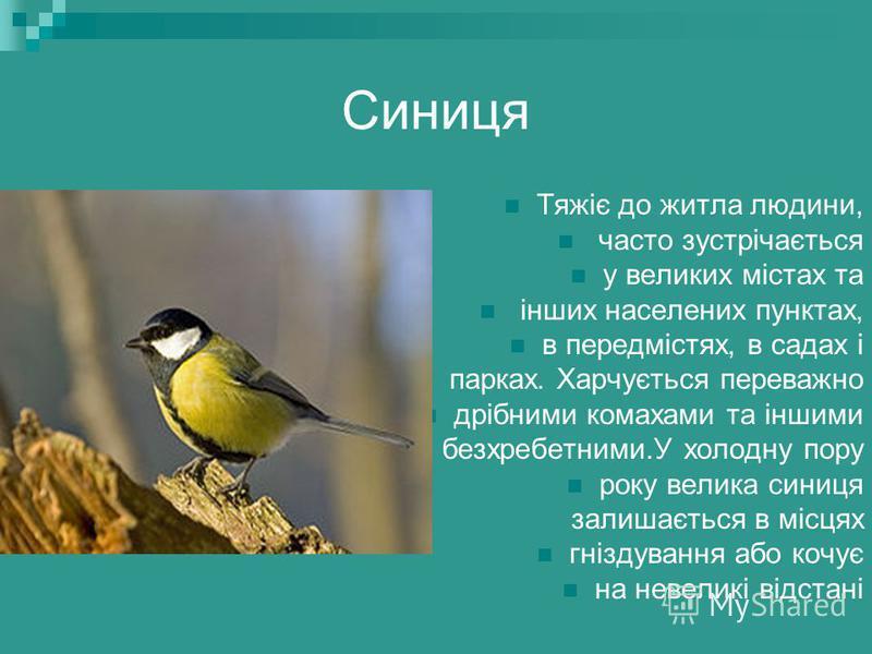 Звичайна чайка Її часто можна спостерігати влітку на річках і озерах. Гніздиться переважно на невеликих прісноводних водоймах