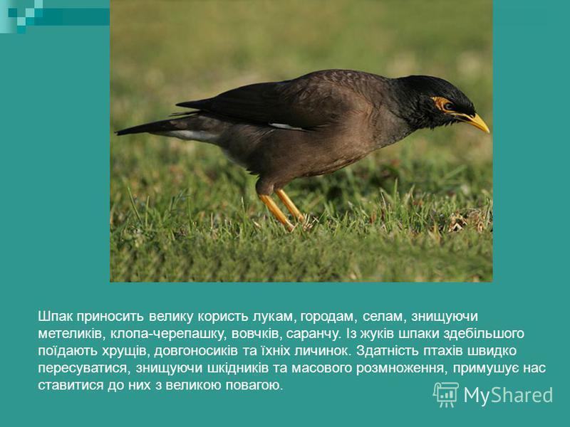 Шпаки Шпаки відомі й улюблені в Україні. Повернення шпака нагадує нам про настання весни. Шпаки перелітні птахи. На зиму відлітають на південь до Європи, до Малої Азії та Північної Африки. Під час перельотів вони летять зі швидкістю 80 км/год.