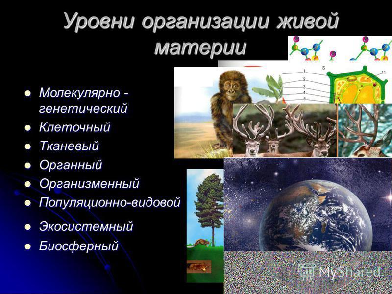 Уровни организации живой материи Молекулярно - генетический Молекулярно - генетический Клеточный Клеточный Тканевый Тканевый Органный Органный Организменный Организменный Популяционно-видовой Популяционно-видовой Экосистемный Экосистемный Биосферный