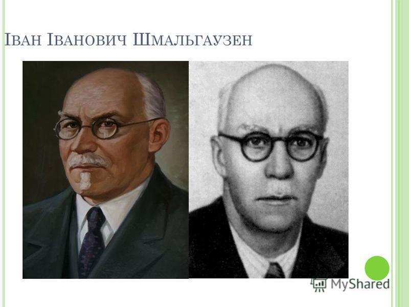 І ВАН І ВАНОВИЧ Ш МАЛЬГАУЗЕН