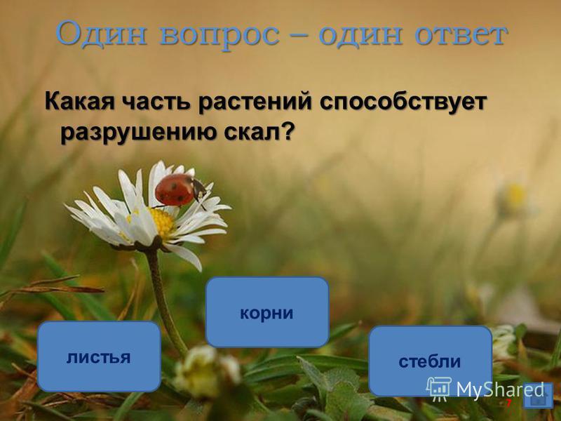 Один вопрос – один ответ Какая часть растений способствует разрушению скал? корни листья стебли 7
