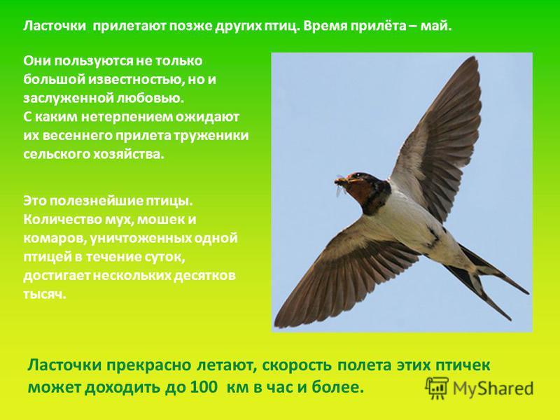 Ласточки прилетают позже других птиц. Время прилёта – май. Это полезнейшие птицы. Количество мух, мошек и комаров, уничтоженных одной птицей в течение суток, достигает нескольких десятков тысяч. Они пользуются не только большой известностью, но и зас