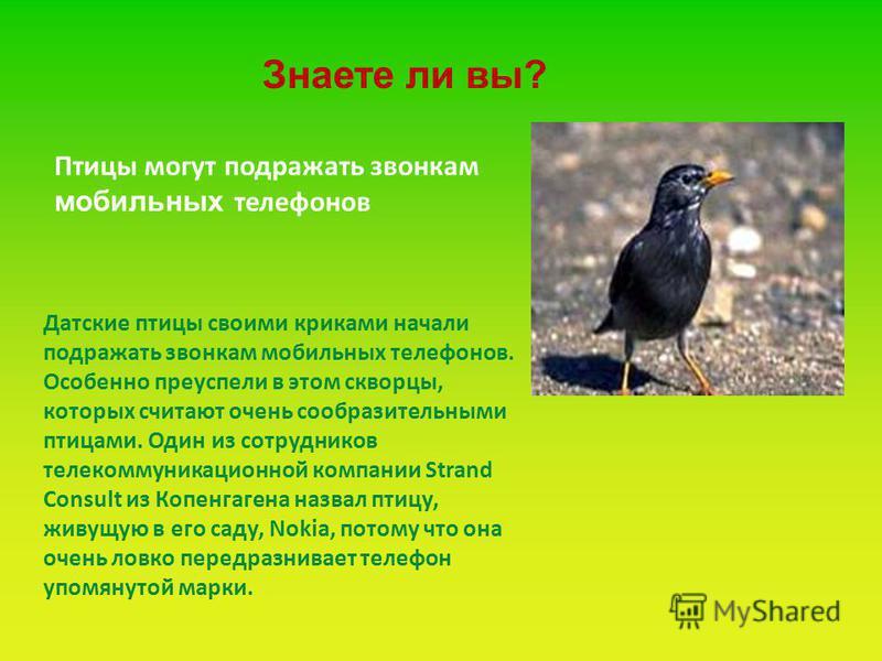 Датские птицы своими криками начали подражать звонкам мобильных телефонов. Особенно преуспели в этом скворцы, которых считают очень сообразительными птицами. Один из сотрудников телекоммуникационной компании Strand Consult из Копенгагена назвал птицу