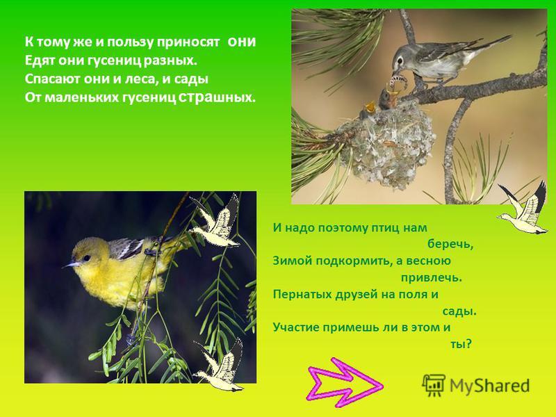 К тому же и пользу приносят они Едят они гусениц разных. Спасают они и леса, и сады От маленьких гусениц страшных. И надо поэтому птиц нам беречь, Зимой подкормить, а весною привлечь. Пернатых друзей на поля и сады. Участие примешь ли в этом и ты?