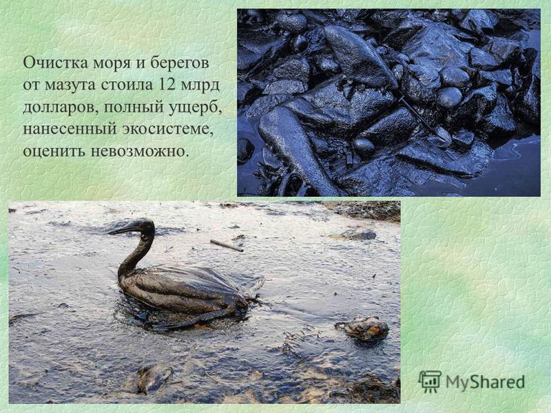Очистка моря и берегов от мазута стоила 12 млрд долларов, полный ущерб, нанесенный экосистеме, оценить невозможно.