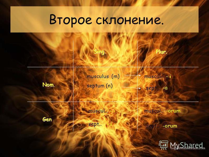 Второе склонение. Sing. Plur. Nom. Gen musculus (m) septum (n) muscul.. sept.. - i -a -orum