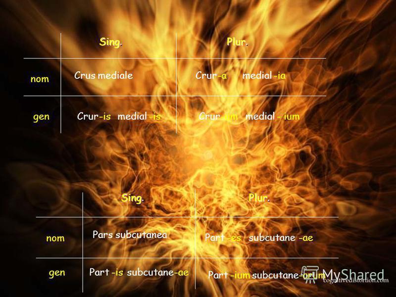 Crus mediale Crur medial -is -a -um -ia - ium Pars subcutanea Part subcutane -ae -arum -is -es -ium Sing. Plur. nom gen