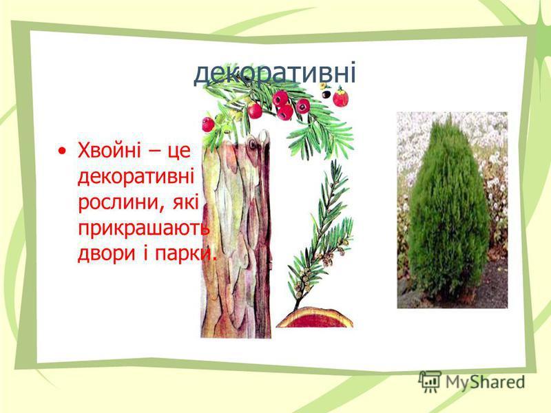 декоративні Хвойні – це декоративні рослини, які прикрашають двори і парки.