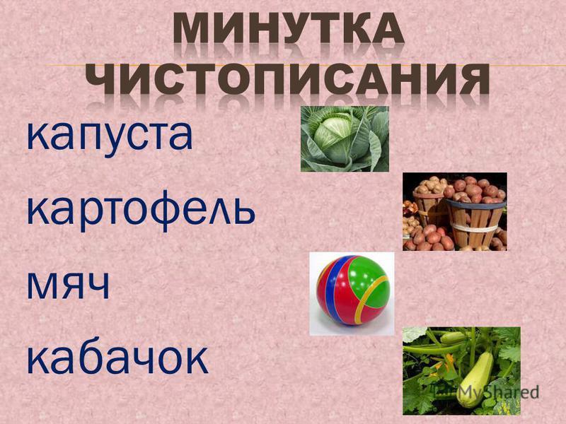 капуста картофель мяч кабачок