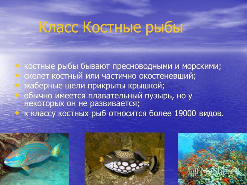 Класс Костные рыбы костные рыбы бывают пресноводными и морскими; скелет костный или частично окостеневший; жаберные щели прикрыты крышкой; обычно имеется плавательный пузырь, но у некоторых он не развивается; к классу костных рыб относится более 1900