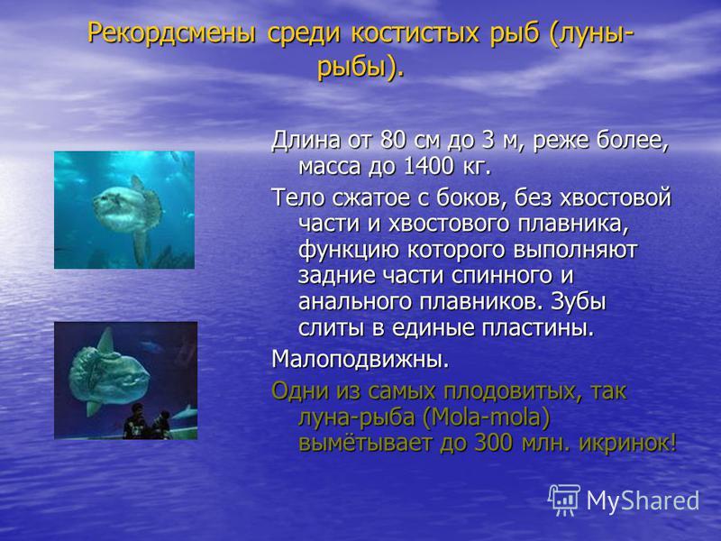Рекордсмены среди костистых рыб (луны- рыбы). Длина от 80 см до 3 м, реже более, масса до 1400 кг. Тело сжатое с боков, без хвостовой части и хвостового плавника, функцию которого выполняют задние части спинного и анального плавников. Зубы слиты в ед