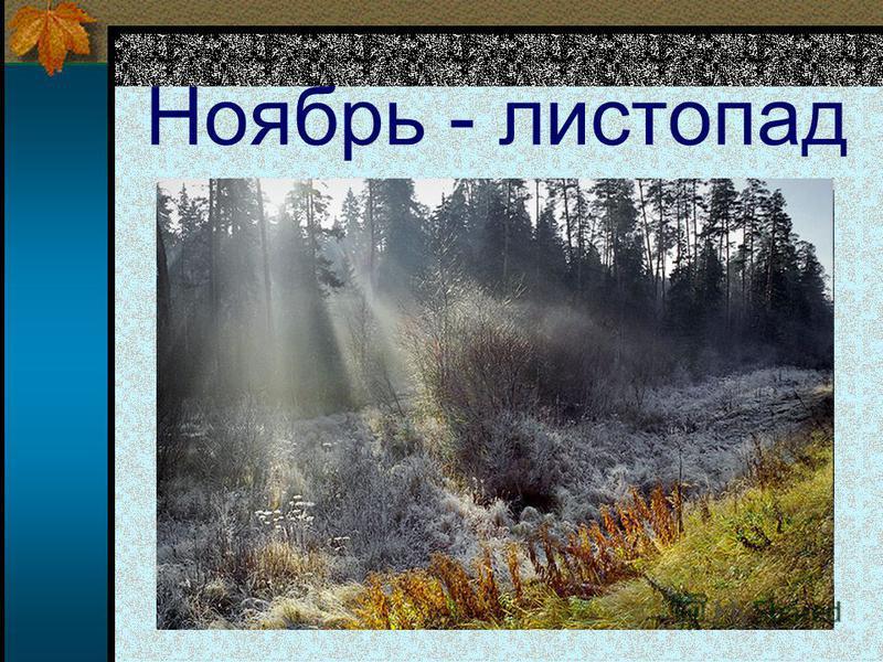 Ноябрь - листопад