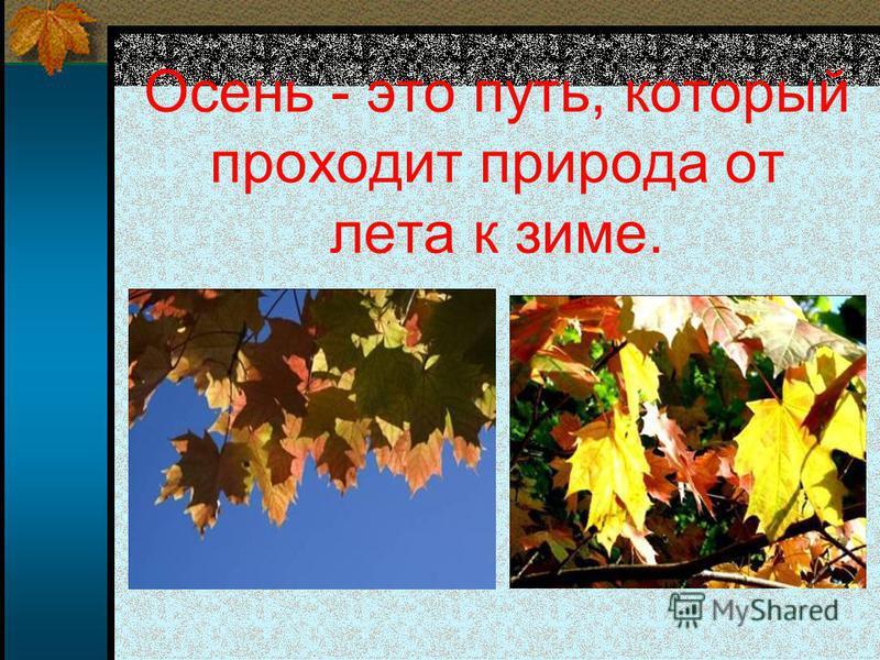Осень - это путь, который проходит природа от лета к зиме.