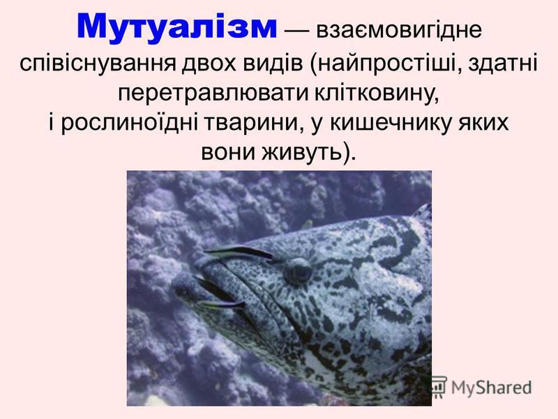 Мутуалізм взаємовигідне співіснування двох видів (найпростіші, здатні перетравлювати клітковину, і рослиноїдні тварини, у кишечнику яких вони живуть).