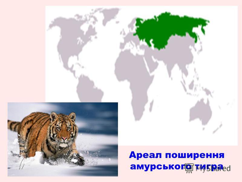 Ареал поширення амурського тигра