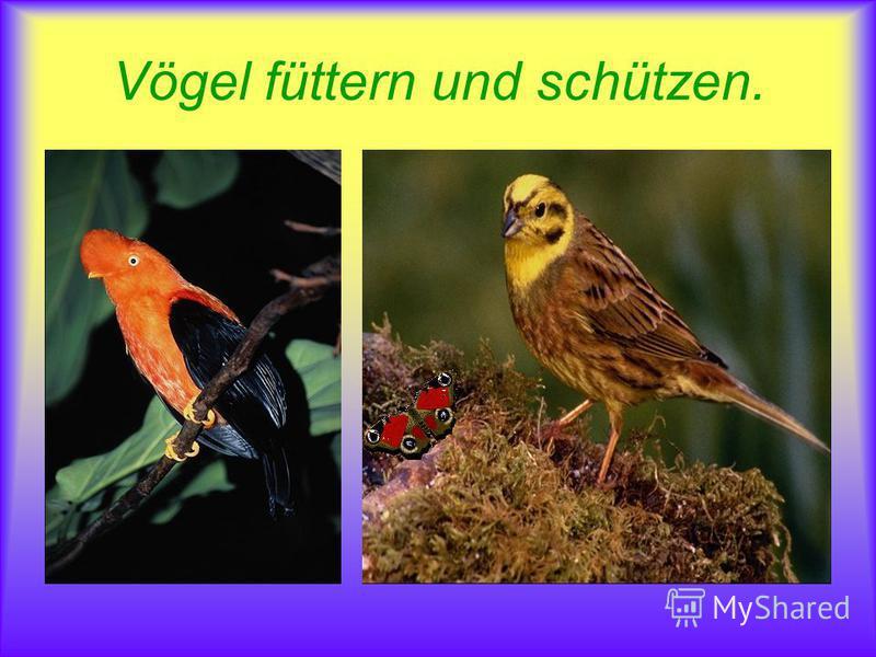 Vögel füttern und schützen.
