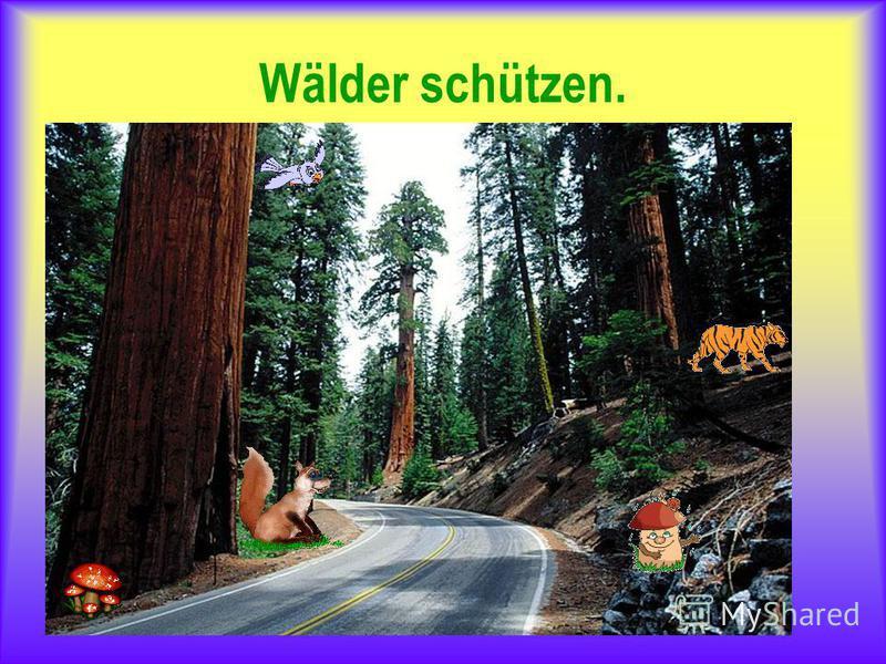 Wälder schützen.