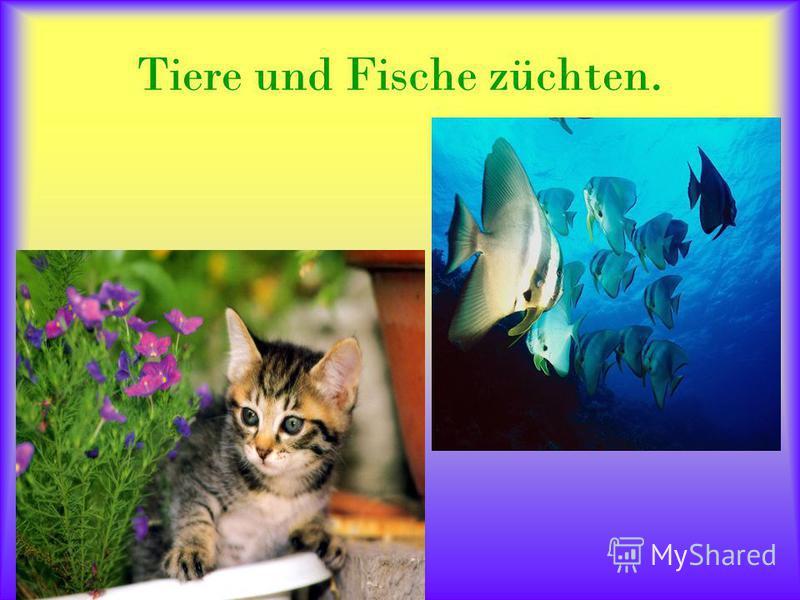 Tiere und Fische züchten.