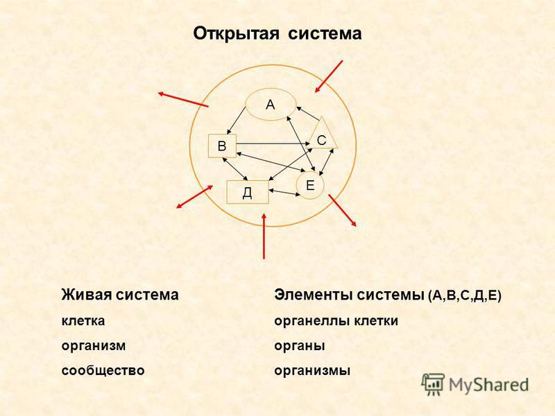 А В Д Е С Открытая система Живая система клетка организм сообщество Элементы системы (А,В,С,Д,Е) органеллы клетки органы организмы