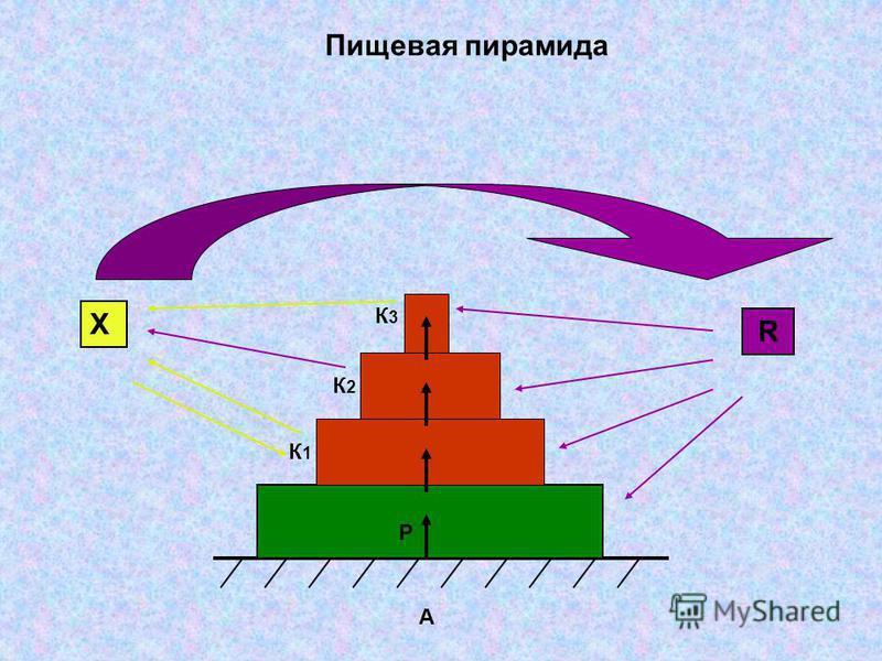 Пищевая пирамида Х R К3К3 К2К2 К1К1 Р А