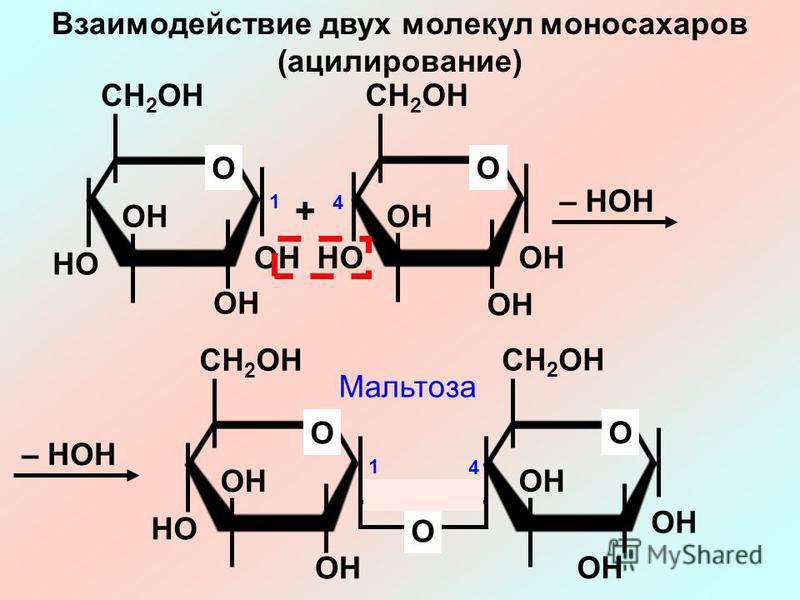 CH 2 OH OH O HO CH 2 OH OH O HO + – HOH CH 2 OH OH O HO CH 2 OH OH O O Взаимодействие двух молекул моносахаридов (ацилирование) 4 1 4 1 Мальтоза