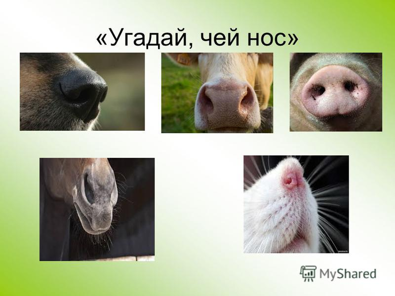 «Угадай, чей нос»
