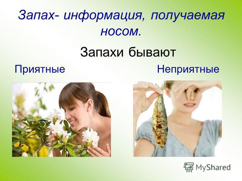 Запах- информация, получаемая носом. Запахи бывают Приятные Неприятные