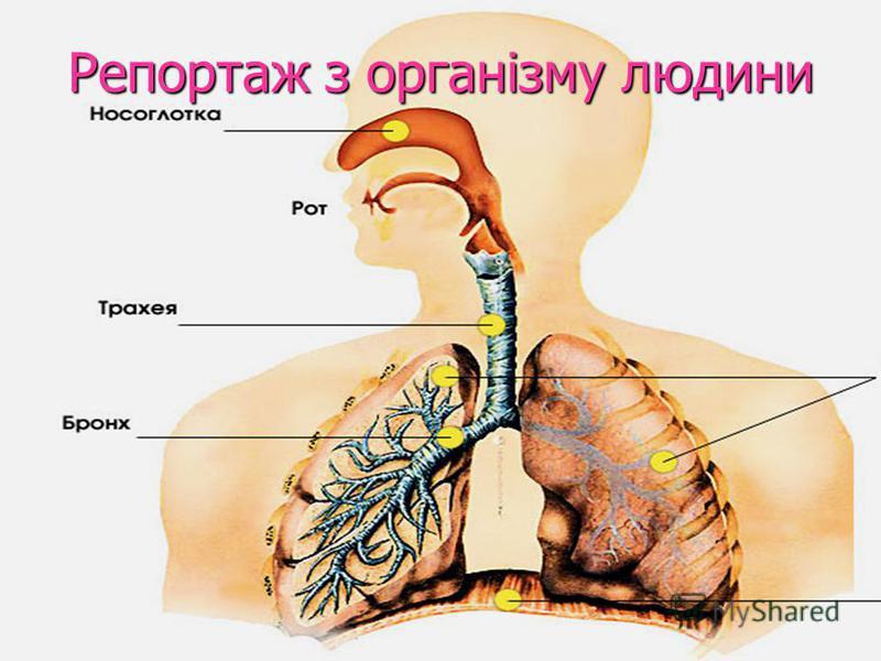 Проблемна ситуація Яка система органів існує у людини для того,щоб забезпечувати організм киснем ДОИРХГААНННИЯ Повідомлення теми і завдань уроку Дізнаємось,як повітря потрапляє до організму,як запобігти захворюванням органів дихання і яку роль при ць