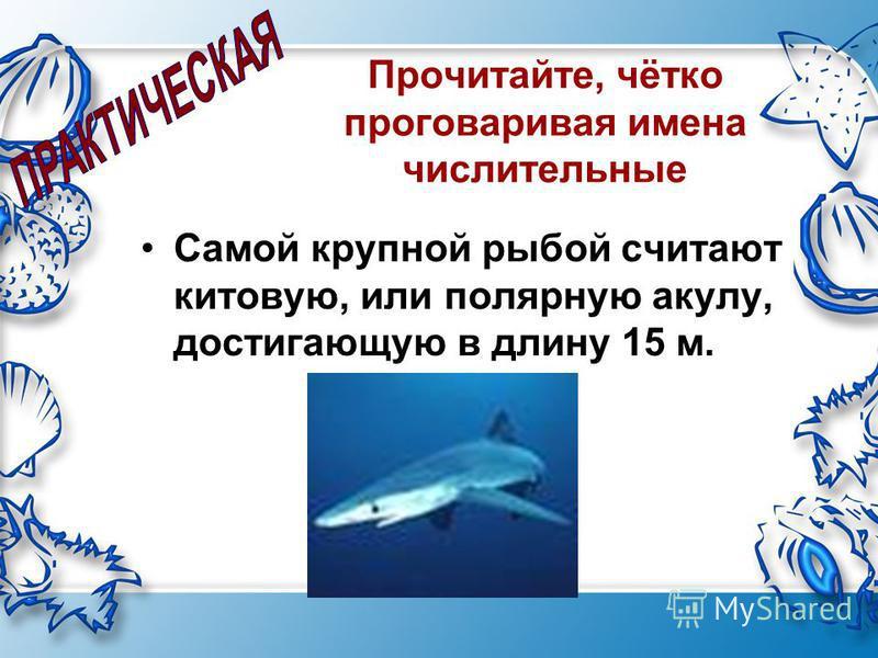 Прочитайте, чётко проговаривая имена числительные Самой крупной рыбой считают китовую, или полярную акулу, достигающую в длину 15 м.