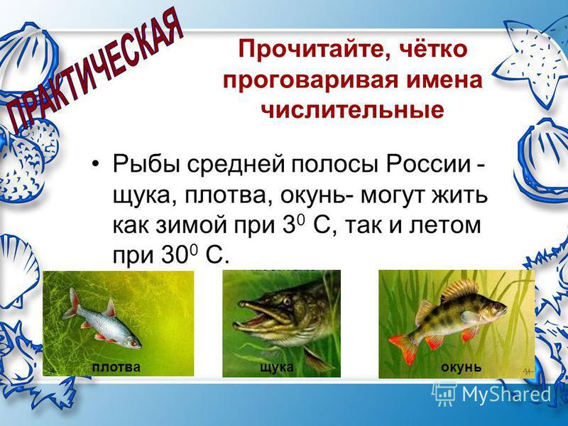 Прочитайте, чётко проговаривая имена числительные Рыбы средней полосы России - щука, плотва, окунь- могут жить как зимой при 3 0 С, так и летом при 30 0 С. плотва щука окунь плотва щука