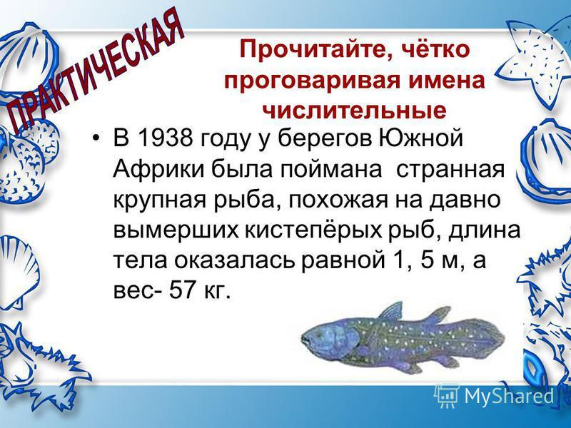Прочитайте, чётко проговаривая имена числительные В 1938 году у берегов Южной Африки была поймана странная крупная рыба, похожая на давно вымерших кистепёрых рыб, длина тела оказалась равной 1, 5 м, а вес- 57 кг.
