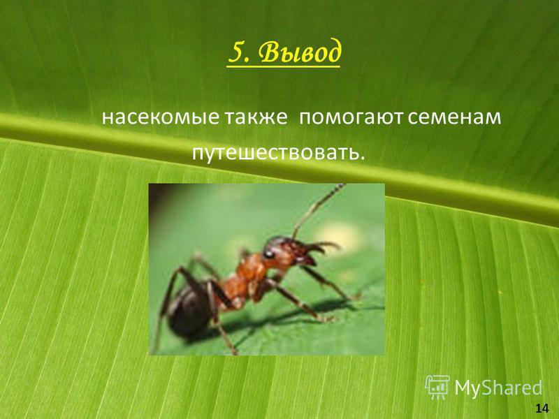 5. Вывод насекомые также помогают семенам путешествовать. 14
