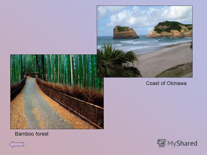Coast of Okinawa Bamboo forest