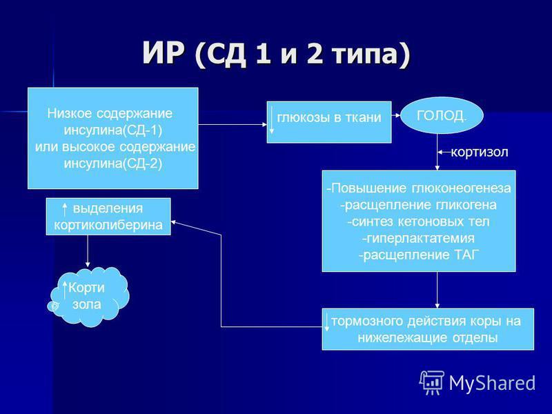 ИР (СД 1 и 2 тыпа) Низкое содержание инсулина(СД-1) или высокое содержание инсулина(СД-2) глюкозы в ткани ГОЛОД. -Повышение глюконеогенеза -расщепление гликогена -синтез кетоновых тел -гиперлактатемия -расщепление ТАГ тормозного действия коры на ниже