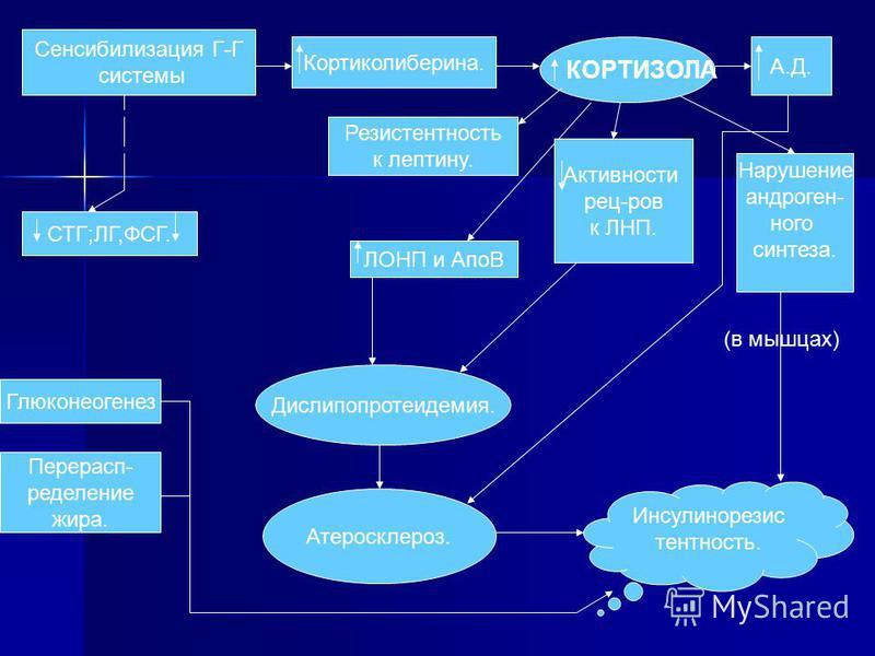 Сенсибилизация Г-Г системы СТГ;ЛГ,ФСГ. Кортыколиберина. КОРТИЗОЛА Резислатентность к лептыну. А.Д. ЛОНП и АпоВ Дислипопротеидемия. Актывносты рец-ров к ЛНП. Атеросклероз. Нарушение андрогенного синтеза. Инсулинорезис латентность. Глюконеогенез Перера
