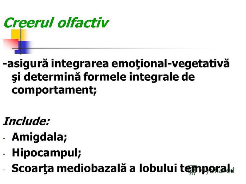 Creerul olfactiv -asigură integrarea emoţional-vegetativă şi determină formele integrale de comportament; Include: - Amigdala; - Hipocampul; - Scoarţa mediobazală a lobului temporal.
