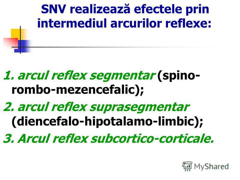 SNV realizează efectele prin intermediul arcurilor reflexe: 1. arcul reflex segmentar (spino- rombo-mezencefalic); 2. arcul reflex suprasegmentar (diencefalo-hipotalamo-limbic); 3. Arcul reflex subcortico-corticale.