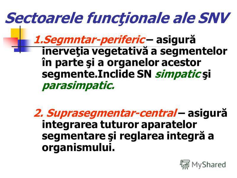 Sectoarele funcţionale ale SNV 1.Segmntar-periferic – asigură inerveţia vegetativă a segmentelor în parte şi a organelor acestor segmente.Inclide SN simpatic şi parasimpatic. 2. Suprasegmentar-central – asigură integrarea tuturor aparatelor segmentar