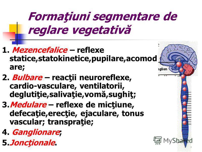 Formaţiuni segmentare de reglare vegetativă 1. Mezencefalice – reflexe statice,statokinetice,pupilare,acomod are; 2. Bulbare – reacţii neuroreflexe, cardio-vasculare, ventilatorii, deglutiţie,salivaţie,vomă,sughiţ; 3.Medulare – reflexe de micţiune, d
