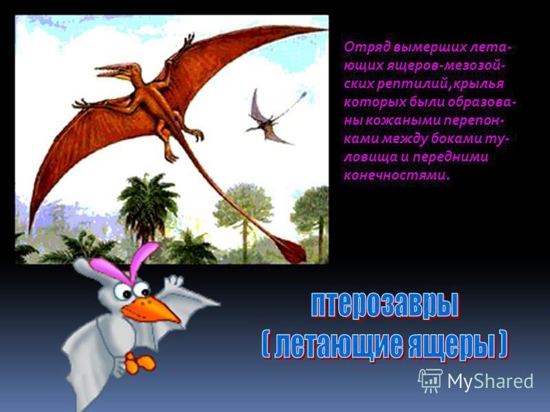 Отряд динозавров, имеющих строение таза,сходное с птица- ми.