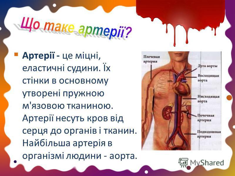 Артерії - це міцні, еластичні судини. Їх стінки в основному утворені пружною м'язовою тканиною. Артерії несуть кров від серця до органів і тканин. Найбільша артерія в організмі людини - аорта.