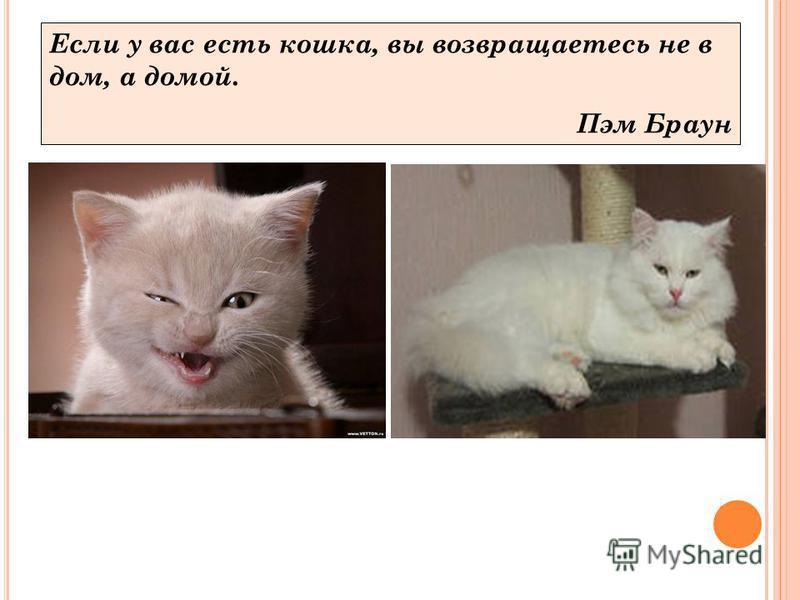 Если у вас есть кошка, вы возвращаетесь не в дом, а домой. Пэм Браун