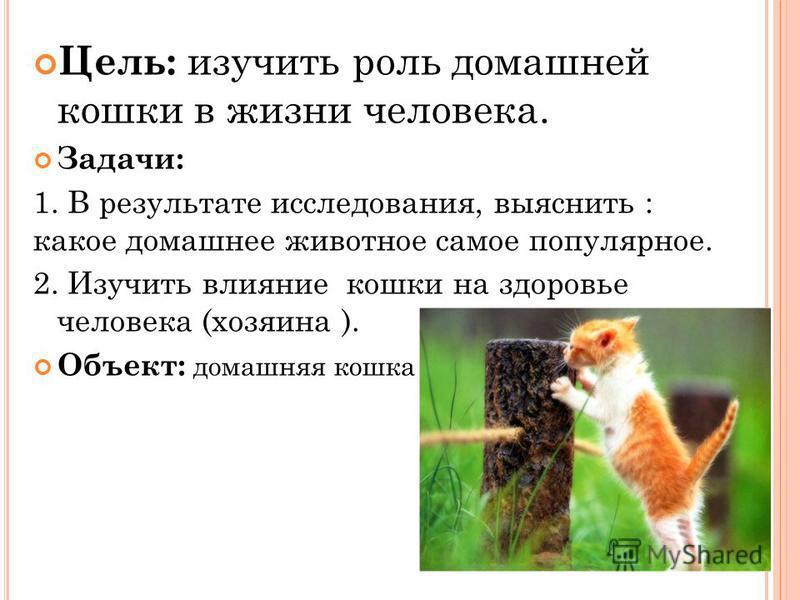 Цель: изучить роль домашней кошки в жизни человека. Задачи: 1. В результате исследования, выяснить : какое домашнее животное самое популярное. 2. Изучить влияние кошки на здоровье человека (хозяина ). Объект: домашняя кошка