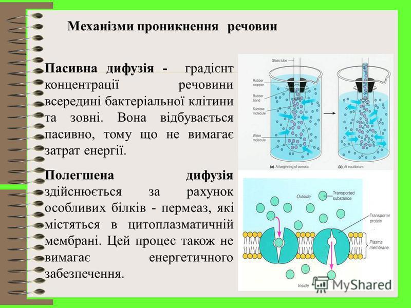 Надходження речовин у клітину. Встановлено, що мікробам притаманний голофітний тип живлення, тобто вони здатні поглинати живильні речовини тільки в розчиненому вигляді.
